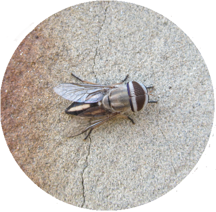 A single image of a fly